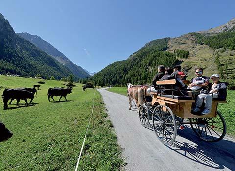 horses-riding-courmayeur-la-thuile-in-carrozza